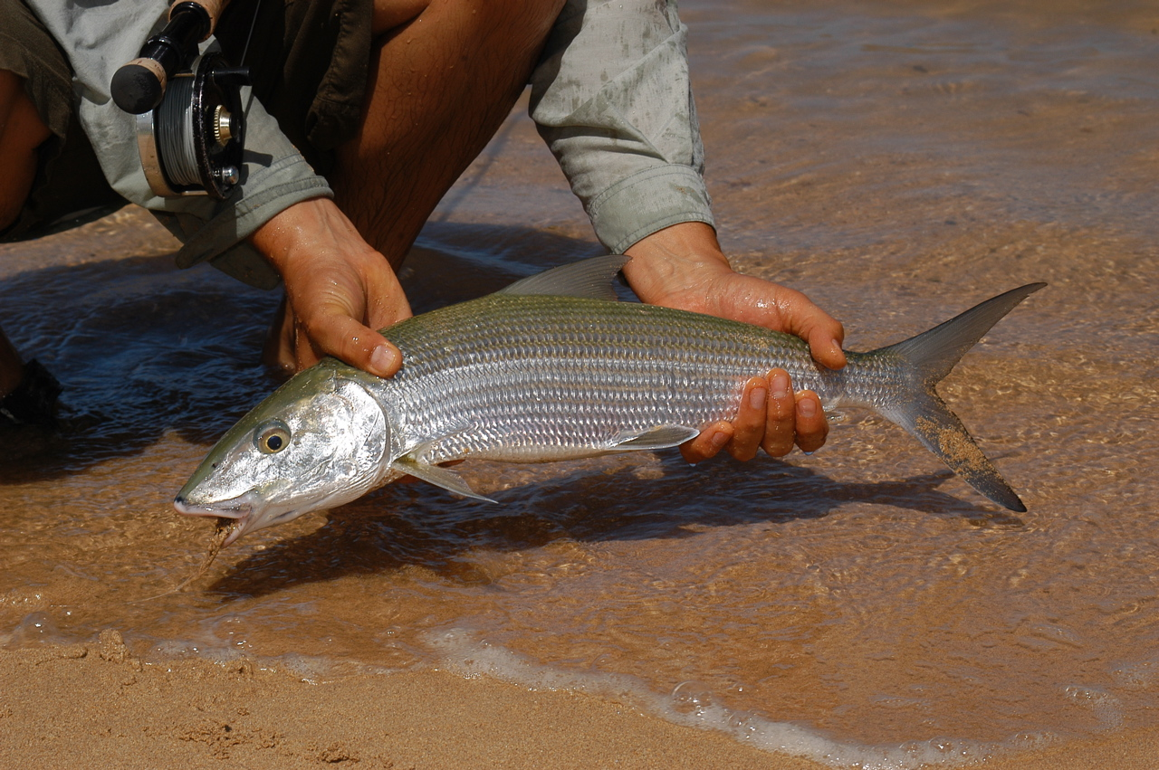 kauai fly fishing bonefishing hawaii fly fishing for the